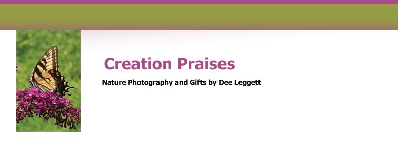 Creation Praises - Nature Photography and Gifts by Dee Leggett